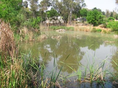 The dam at the Cumberland Bird Sanctuary.
